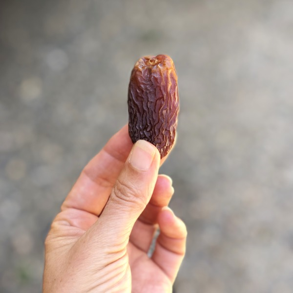 a hand holding a single medjool date.